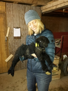 Checking out newborn lambs at the farm