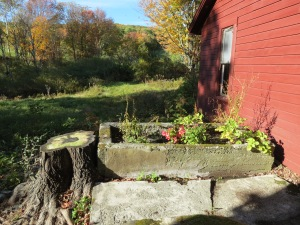 View of North side - I planted a flower garden in the old trough - view as seen through the Kitchen window.
